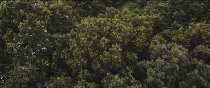 El video de Hunger of the Pine, de Alt-J